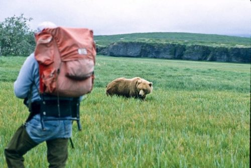 grizzly-hiker-avoid-bear-attacks-RonLevy-Alaska-Photo-Adventures-Alaska-Photo-Adventures