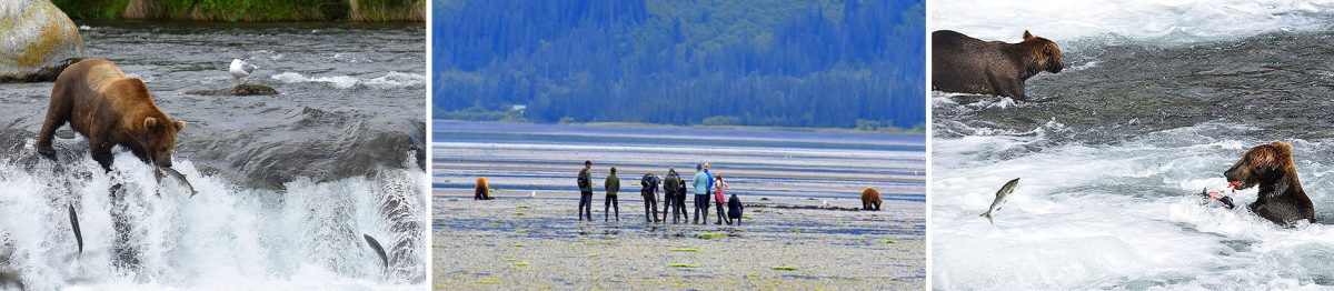 Grizzly bears, Chinitna flats, Lake Clark NP, Alaska - RonLevy